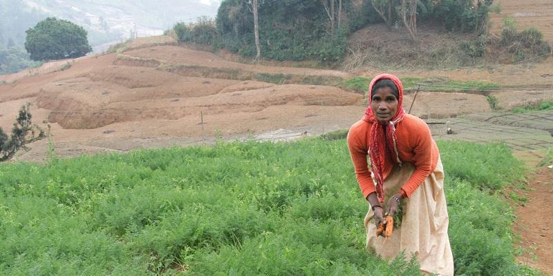 Moren til to af pigerne på Happy Home arbejder som daglejer i grønsagsmarkerne